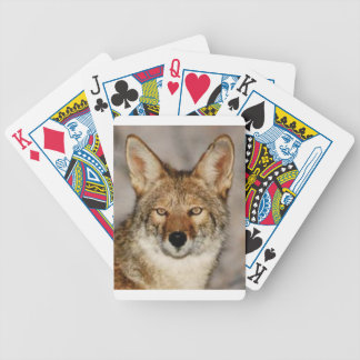 coyote up close bicycle playing cards