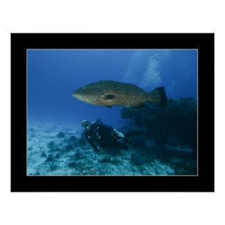 Cozumel - Grouper and Dave Poster