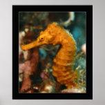Cozumel - Orange Seahorse#2 Print