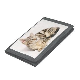 Cozy Cat Wallet