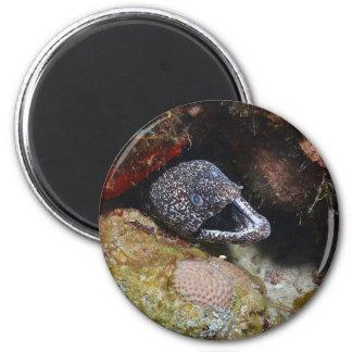 Cozy Eel 2 Inch Round Magnet