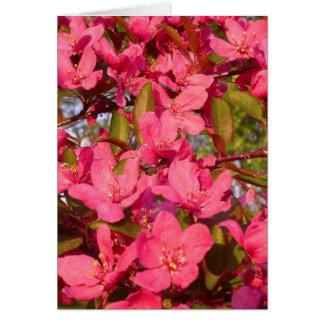 Crab Apple Blossoms Card