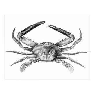 crab card postcard