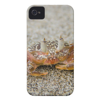 Crab claws iPhone 4 cover