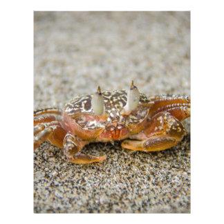 Crab claws letterhead