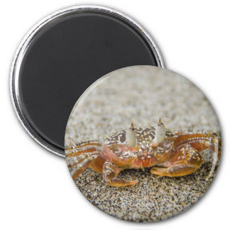 Crab claws magnet