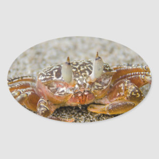 Crab claws oval sticker