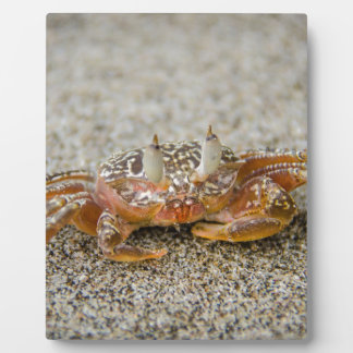 Crab claws plaque