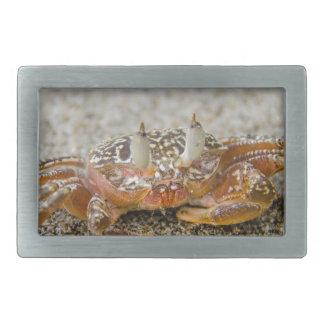 Crab claws rectangular belt buckle