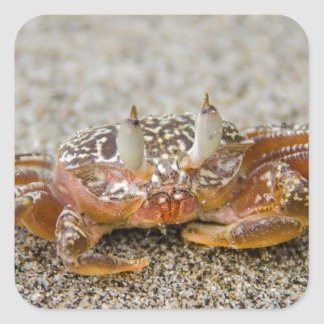 Crab claws square sticker