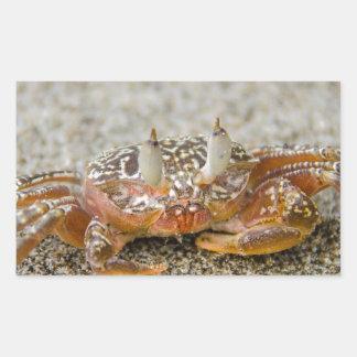 Crab claws sticker