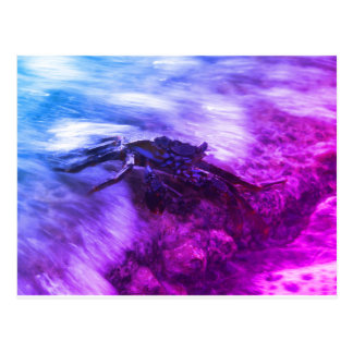 Crab in Waves Postcard
