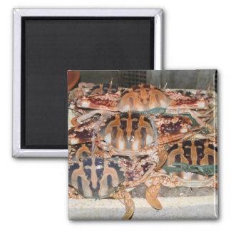 Crab Refrigerator Magnet