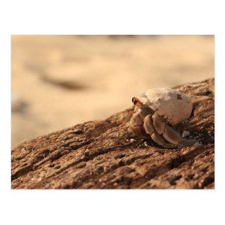 Crab on the beach postcard