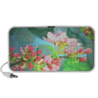 Crabapple Blossoms, Circa 1955 - Speakers