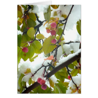Crabapple:Snow Card