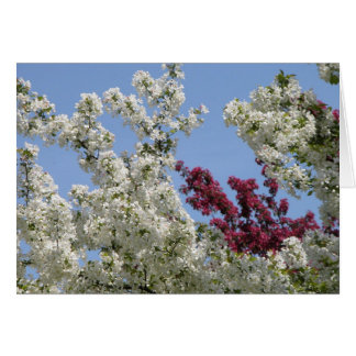 Crabapples in the Arboretum Card