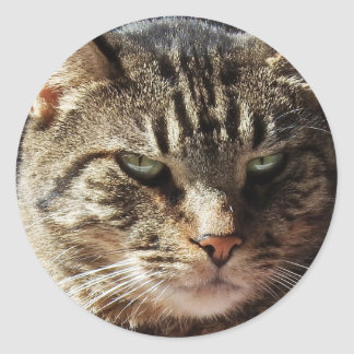 Crabby Tabby Cat Classic Round Sticker