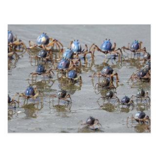 Crabs at Beach Postcard