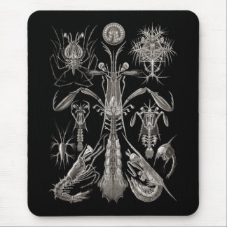 Crabs, Lobster, & Shrimps Mouse Pad