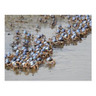 Crabs on Mudflats Postcard