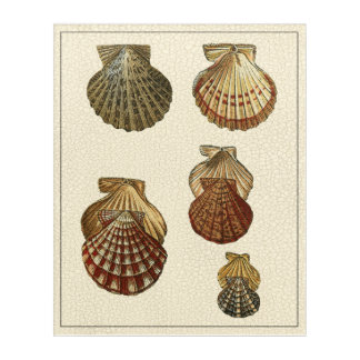 Crackled Antique Shells Acrylic Wall Art