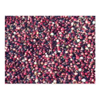 Cranberries Postcard