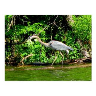 Crane at the Lake Postcard