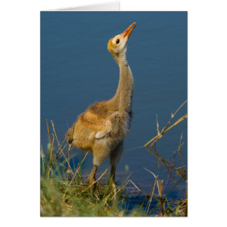 Crane Baby Card
