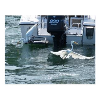Crane fishing postcard