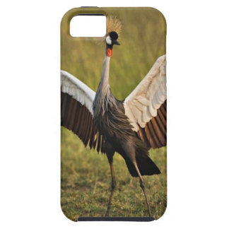 crane.jpg case for the iPhone 5