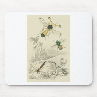Cranefly, Fly, Guinea fly Mouse Pad