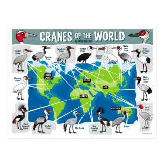 Cranes of the World Postcard