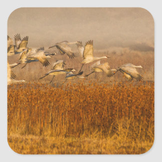 Cranes over golden field square sticker
