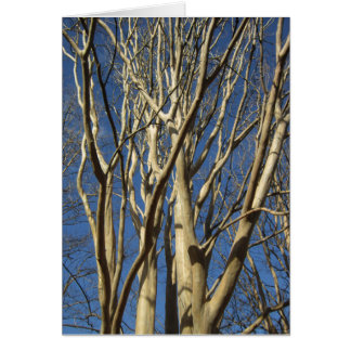 Crape Myrtle In Winter Card