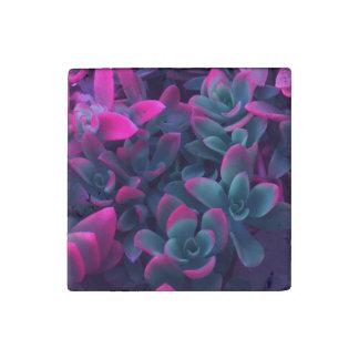 Crassula Campfire Colorful Succulent Plants Stone Magnets