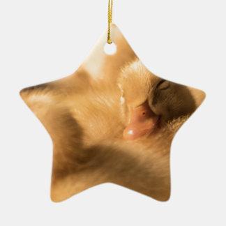 CrawfordBethany camaraderie Ceramic Star Ornament
