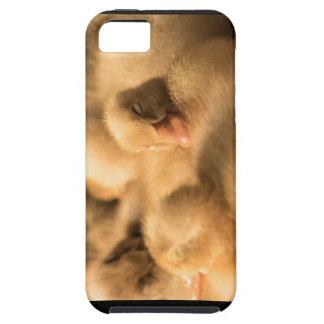 CrawfordBethany camaraderie iPhone 5 Cases