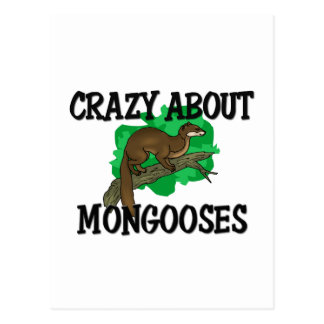 Crazy About Mongooses Postcard
