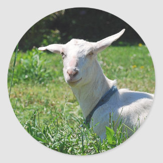 Crazy Amish Goat Sticker