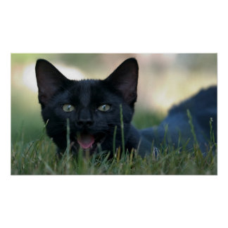 Crazy Black Cat Poster
