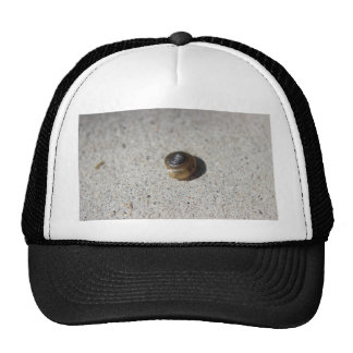 Crazy Snail Hat