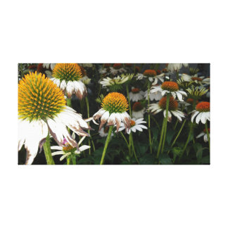 Crazy White Echinacea Eastern Purple Coneflower Canvas Print
