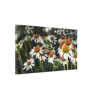 Crazy White Echinacea Eastern Purple Coneflower Canvas Print