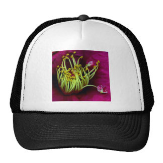 Crazy Yellow Stamens Surrounded by Pink Petals Trucker Hat