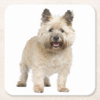 Cream Cairn Terrier Puppy Dog Love Square Paper Coaster