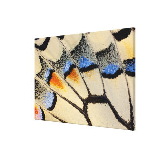 Cream color butterfly wing detail canvas print