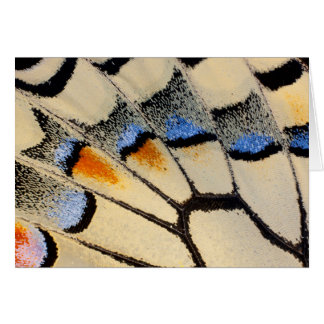 Cream color butterfly wing detail card
