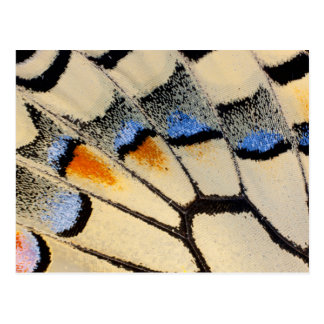 Cream color butterfly wing detail postcard