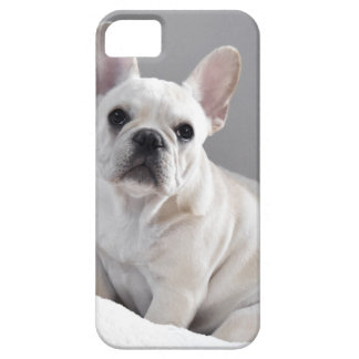 Cream Frenchie iPhone 5 Cover